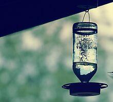 colibri 2 by tuetano