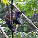 Howler monkey and baby by Jim Cumming