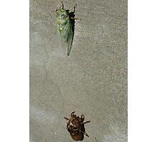 Cicada Reborn Photographic Print
