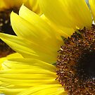 Sunflower by Stephie Butler