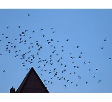 Pigeons in flight Photographic Print
