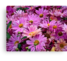 Pink Asters 2 Canvas Print