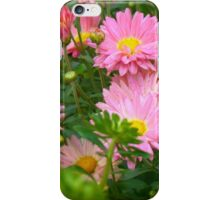 Pink Asters 4 iPhone Case/Skin
