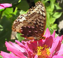 Butterfly and Zinnia by jansnow