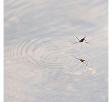 skimming Photographic Print