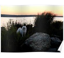 Naragansett Bay, Rhode Island  - Sylvie Loves a Great Sunset! Poster