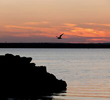 Naragansett Bay, Rhode Island - Flying in for Supper by Jack McCabe