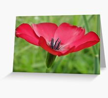 Red Flax Greeting Card