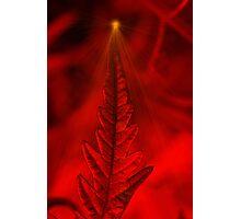 Natures Christmas Card Holiday Tree  Photographic Print