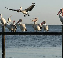Pelican Air Traffic Control by Helen Phillips