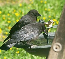 TWO CROW CHILDREN by Dayonda
