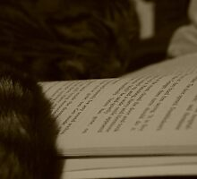 Reading Cat by MuurhImATrex