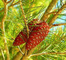pine cone by terezadelpilar~ art & architecture
