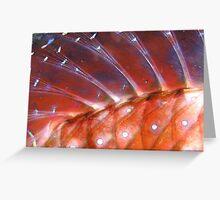 Goatfish Detail Greeting Card