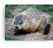 Chuck, the Groundhog Canvas Print
