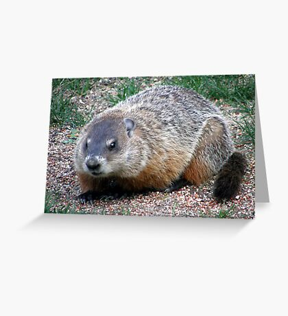 Chuck, the Groundhog Greeting Card
