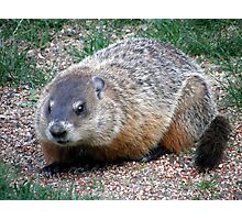 Chuck, the Groundhog Photographic Print