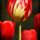 Tulip by Kate Caston