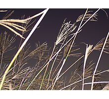 NATIVE GRASSLANDS Photographic Print