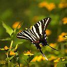 Zebra Swallowtail II by Lisa G. Putman