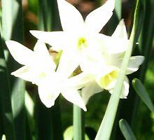 lovely flowers by kneeknee