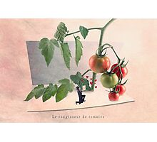 The tomato blusher Photographic Print