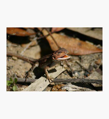 Mountain Dragon Photographic Print