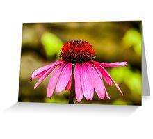 Purple Coneflower - Single Greeting Card