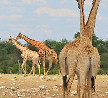 Giraffe - Jealousy and Funny Love by LivingWild