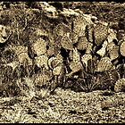 Prickly Pear Sepia by Roger Passman