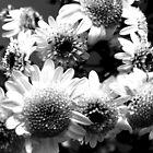 Flowers by JeZzLe