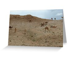 camels in the Judean desert Greeting Card