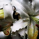 Lily from my summer house by Antanas