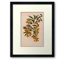 Carolina Jessamine-Available As Art Prints-Mugs,Cases,Duvets,T Shirts,Stickers,etc Framed Print