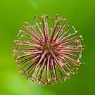 Flower Seed  by Nala