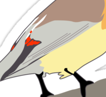 Cedar Waxwing Bird Sticker
