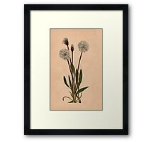 Slender Agoseris-Available As Art Prints-Mugs,Cases,Duvets,T Shirts,Stickers,etc Framed Print