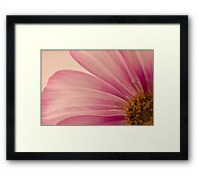 Pink Cosmo Macro  Framed Print
