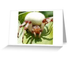 Orb Weaver Greeting Card