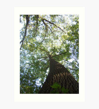 Tall Tall Tree Art Print