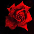 Red Rose II by Igor Shrayer