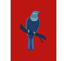 blue bird illustration red Photographic Print