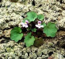 Small flower growing on the old rock wall by senself
