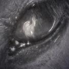 Through The Eye by Gene Praag