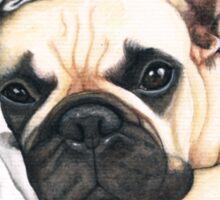 F.I.P. french bulldog - @MiudaFrenchie Sticker