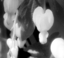 elegant white bleeding hearts, black and white, darker Sticker