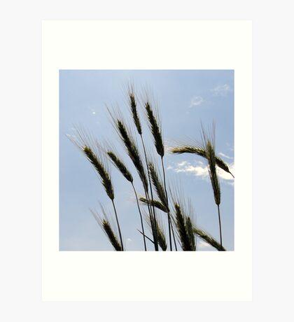 Blue Grass! Art Print