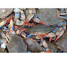 Crab Festival Photographic Print