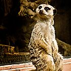 Meerkat Sitting by carlhirst