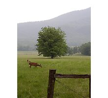 A Quiet Evening in Cades Cove Photographic Print